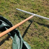 Lawn Care Shepherds Bush