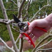 Tree Pruning Shepherds Bush