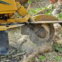 Stump Grinding Shepherds Bush