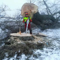 Tree Removal Shepherds Bush