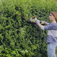Weeding & Pruning Shepherds Bush
